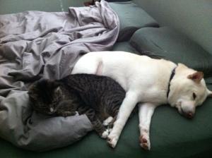Kuma and Tommy
