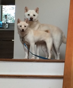 kuma and riley