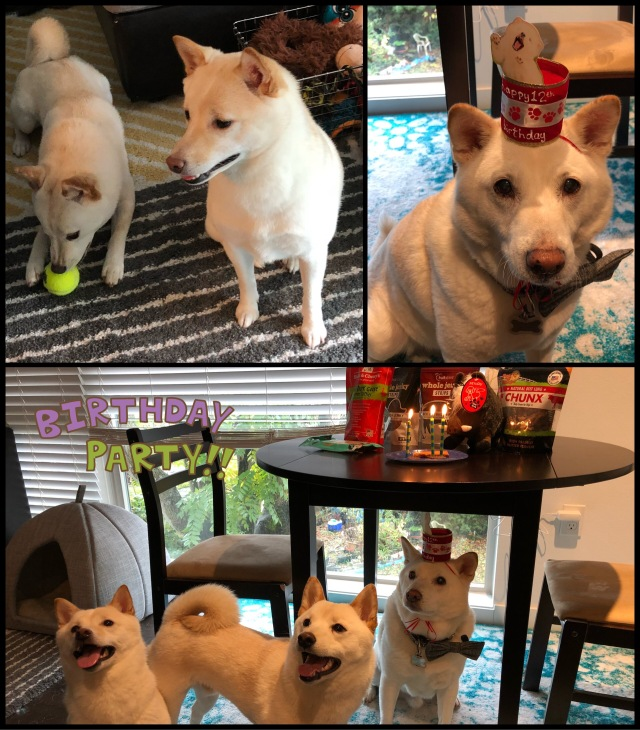 Collage of three dogs' pictures