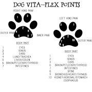 Vitaflexpoints